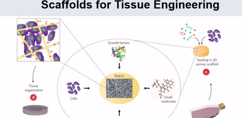 Scaffolds for tissue engineering