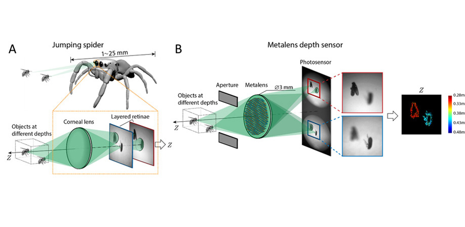 Compact single-shot metalens depth sensor inspired by eyes of jumping spiders