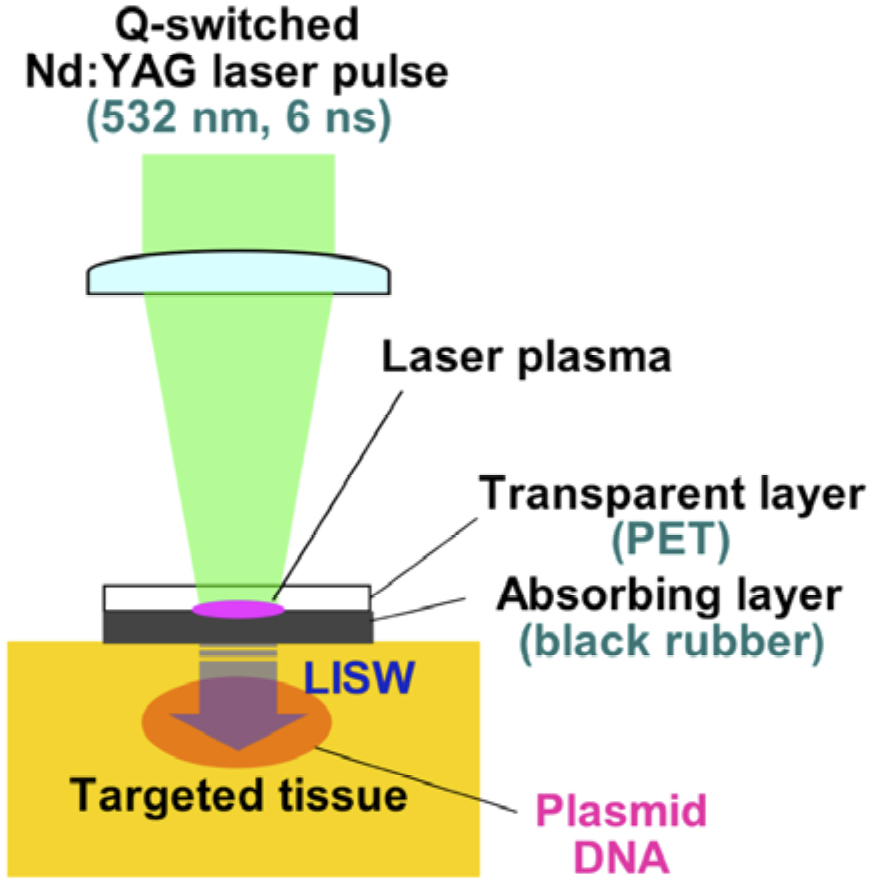 Laser-induced s... Yttrium Laser