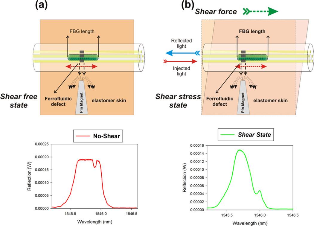 Ferrofluid-infiltrated optical fibers for shear-sensing ...