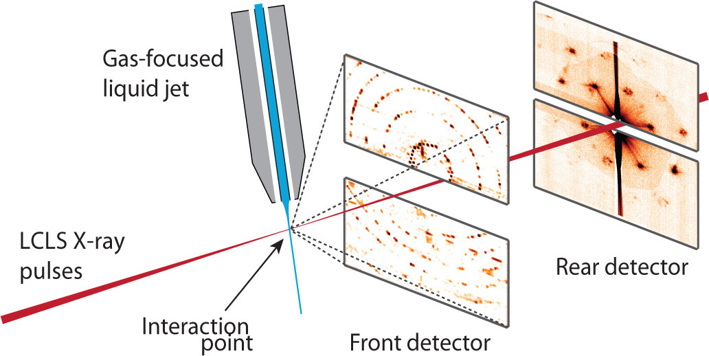 Protein crystallography using x-ray free-electron lasers on